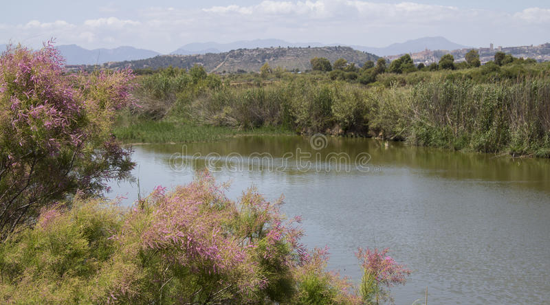 QUARTU S..E: Walk in the Park Molentargius - Sardinia. Wetland within the Molentargius natural park, in the background you can see the city of Cagliari royalty free stock image