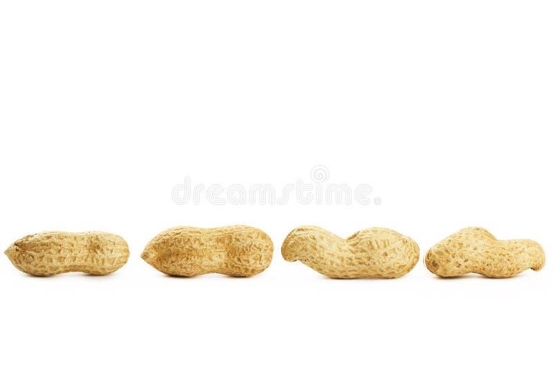 Quatre arachides dans une ligne photo stock