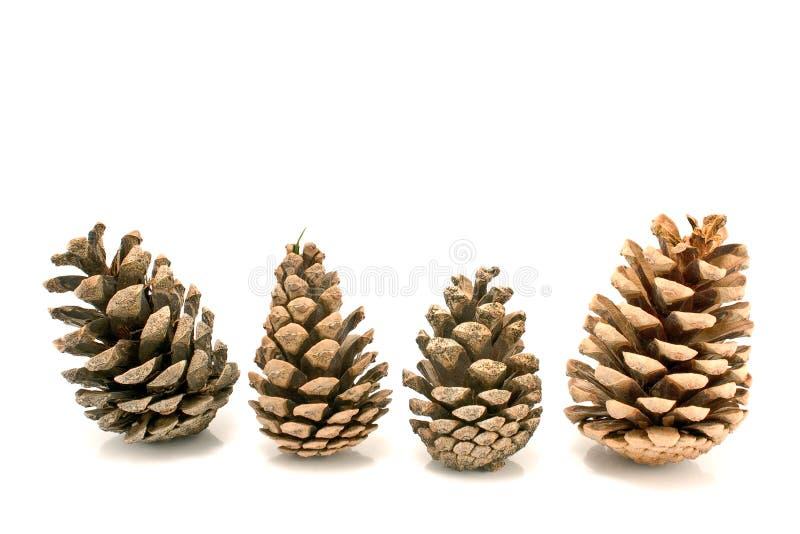 Quatre cônes de pin photos stock