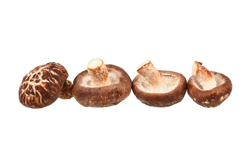 quatre champignons de shiitaké d'isolement sur le blanc photos libres de droits