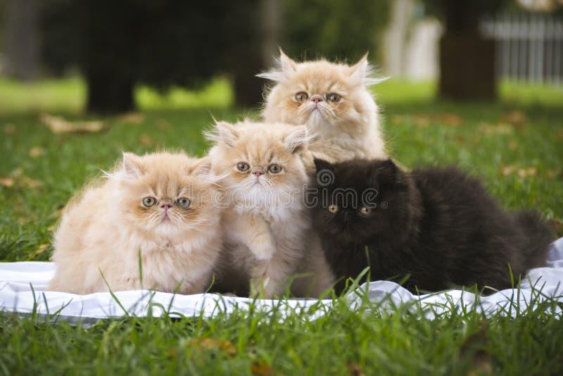 Quatre chatons se reposant sur l'herbe regardant dans l'avant photos stock