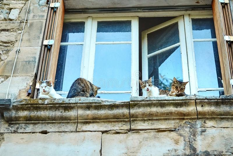 Quatre chats colorés se reposant sur un rebord en pierre image libre de droits