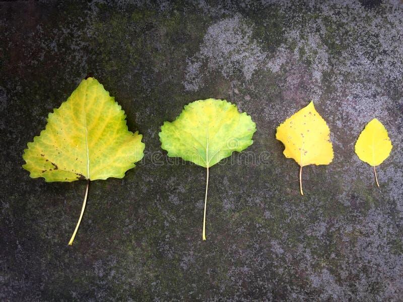 Quatre feuilles tombées sur la terre moussue photographie stock libre de droits