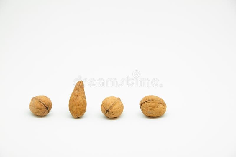 quatre noix dans la ligne sur un fond blanc dans lesquels est une noix différente Au lieu de l'arrondissage lui est prolongé à l' photographie stock libre de droits