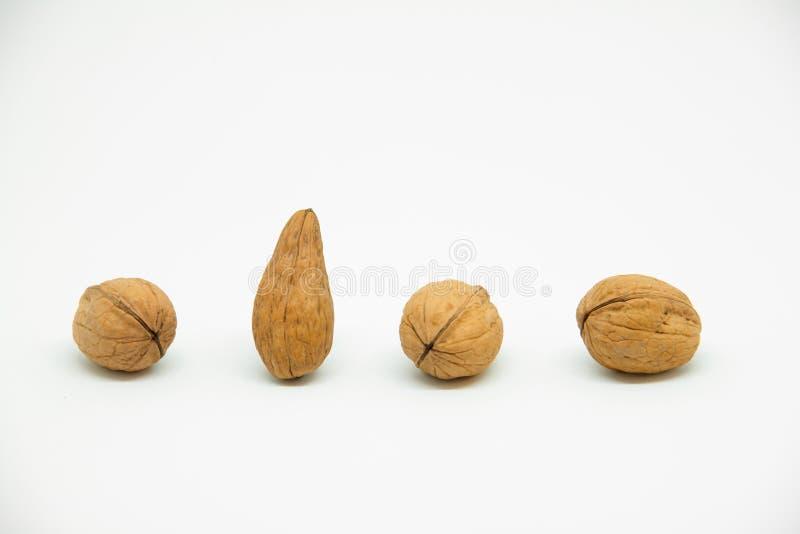 quatre noix dans la ligne sur un fond blanc dans lesquels est une noix diff?rente Au lieu de l'arrondissage lui est prolong? ? l' photos stock
