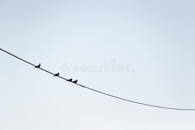 Quatre oiseaux sur un fil photographie stock