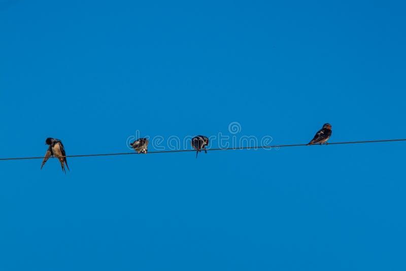 Quatre oiseaux sur un fil contre un ciel bleu photographie stock libre de droits
