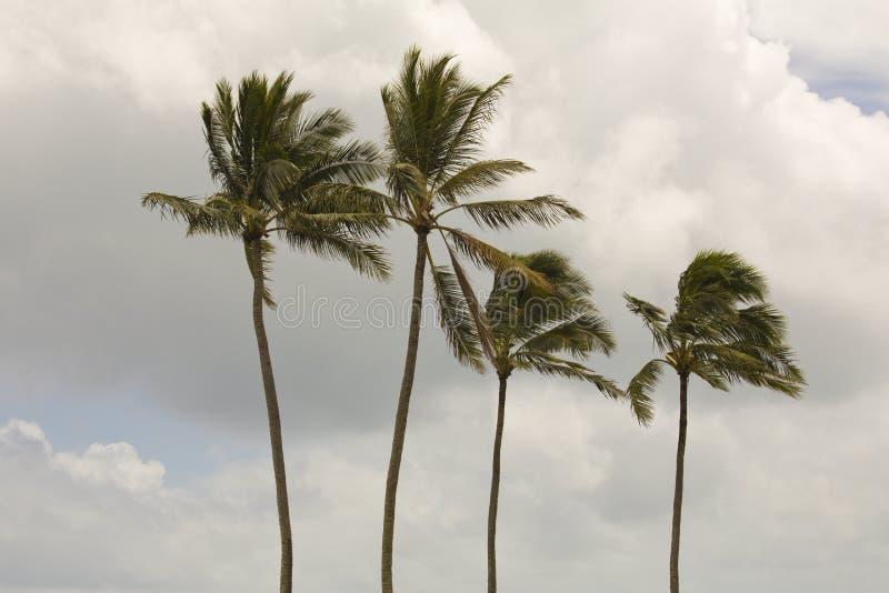 Quatre palmiers photographie stock libre de droits