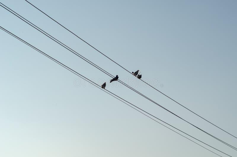 Quatre pigeons sur le fil contre le ciel bleu images libres de droits