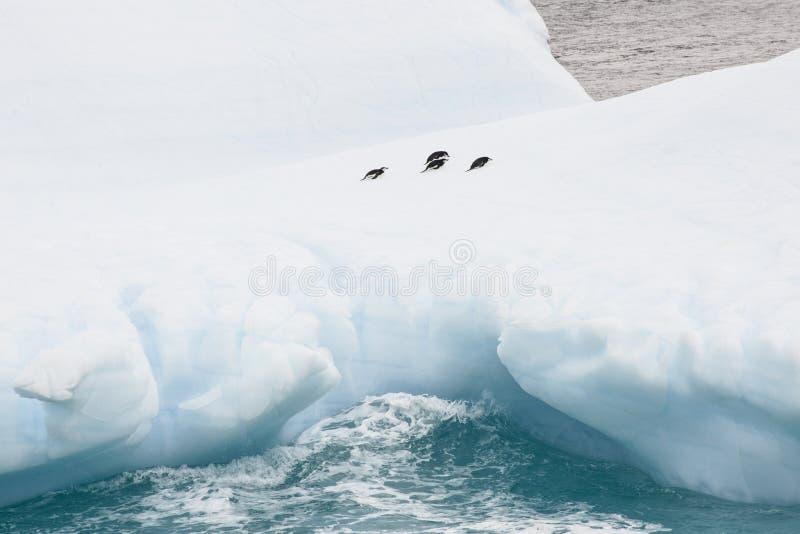 Quatre pingouins se reposant sur un iceberg en Antarctique image libre de droits