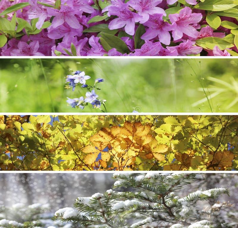 Quatre saisons de nature photos libres de droits