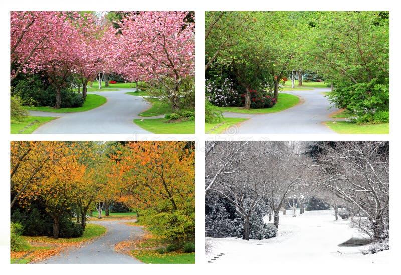 Quatre saisons des cerisiers sur la même rue photographie stock libre de droits