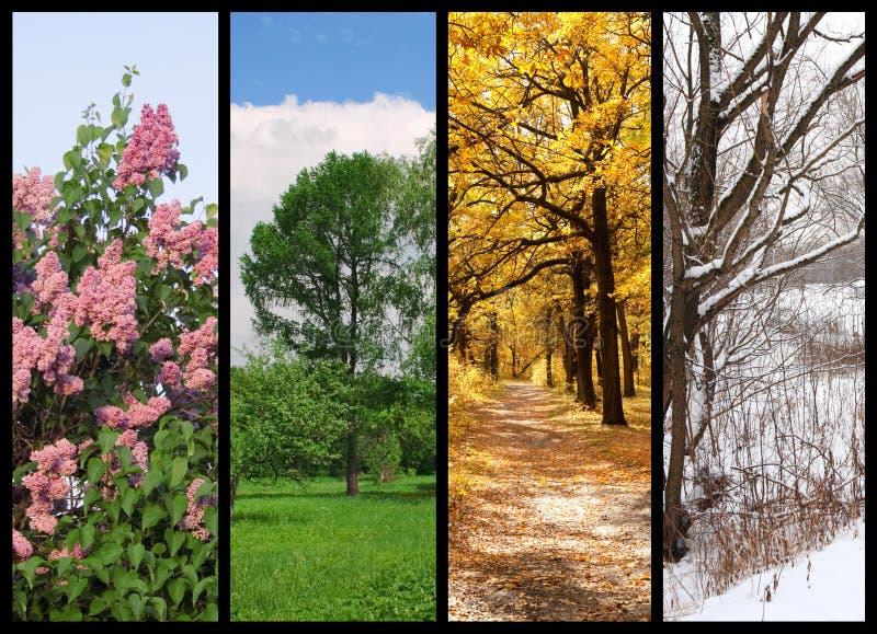 Quatre saisons jaillissent, été, automne, l'hiver image libre de droits