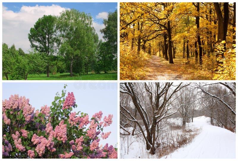 Quatre saisons jaillissent, été, automne, l'hiver photo libre de droits