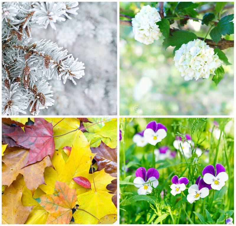 Quatre saisons : Printemps, été, automne et hiver images stock