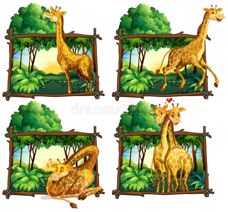 Quatre scènes des girafes dans les bois illustration stock
