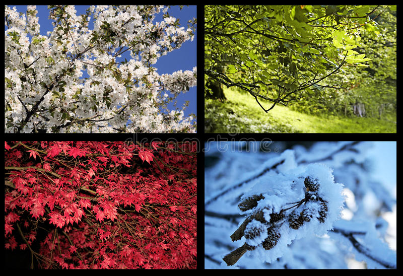 Quatro árvores das estações imagens de stock