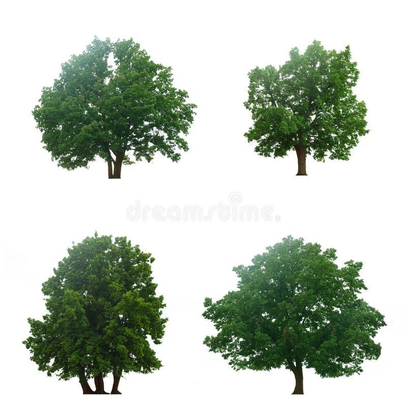 Quatro árvores verdes bonitas fotografia de stock