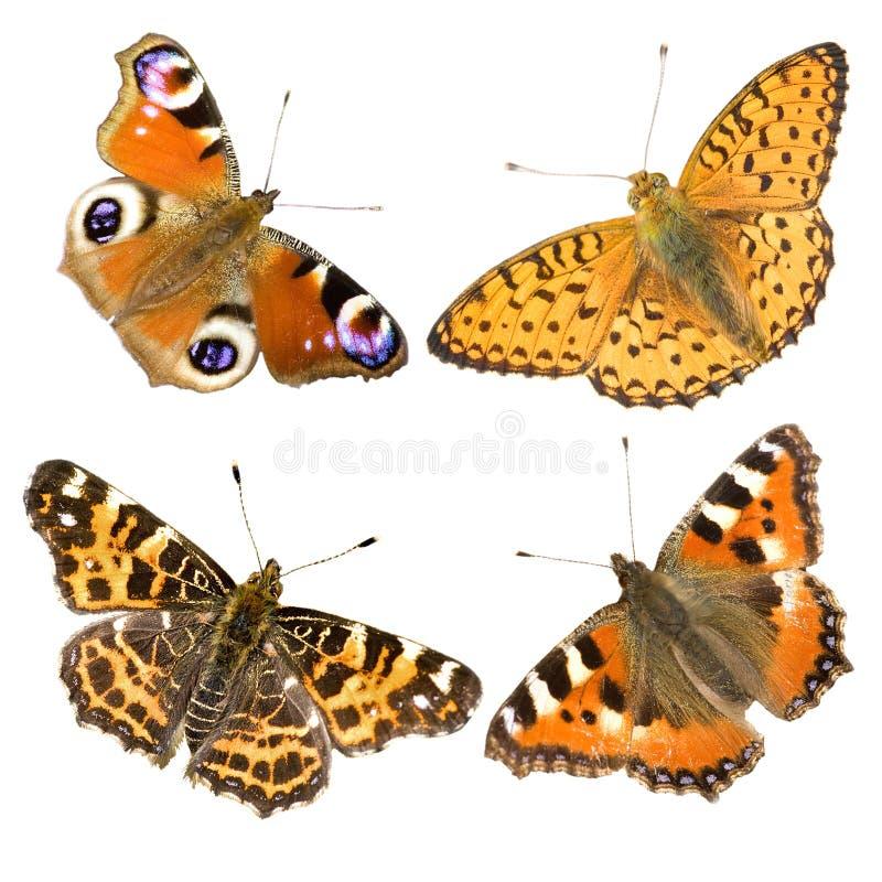 Quatro borboletas no branco foto de stock royalty free