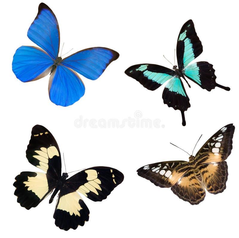 Quatro borboletas tropicais ilustração stock