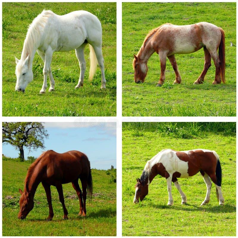 Quatro cavalos imagens de stock