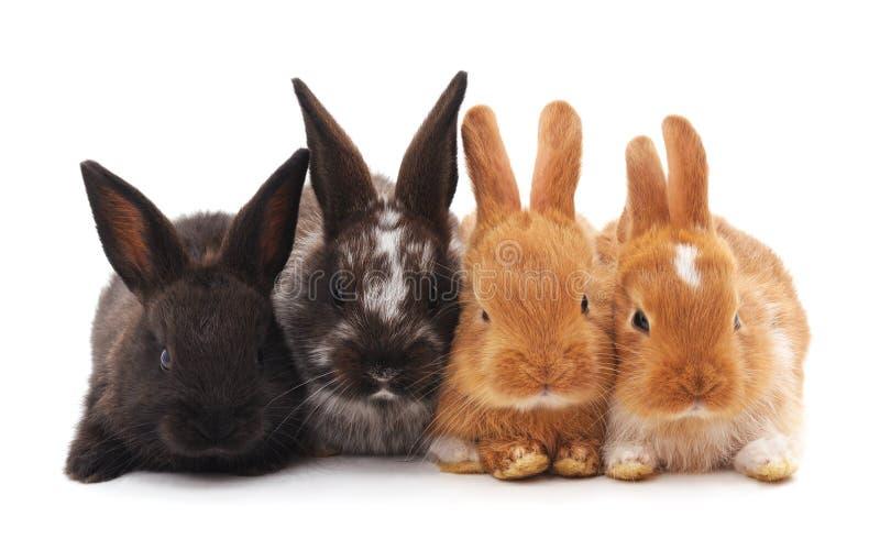 Quatro coelhos pequenos fotos de stock