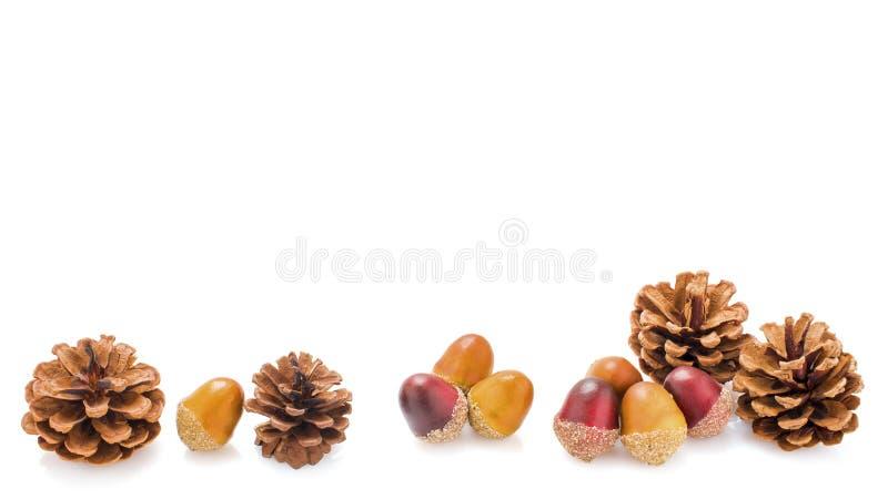 Quatro cones do pinho e oito bolotas imagens de stock