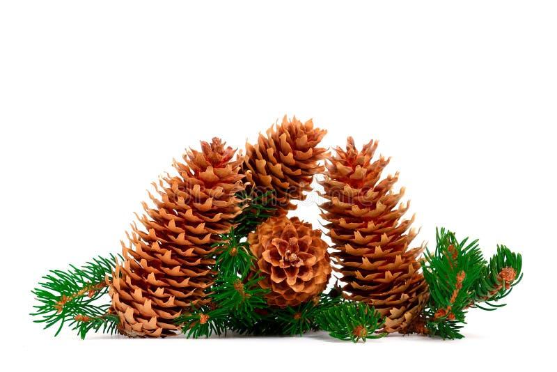 Quatro cones e ramos do pinho em uma decoração cênico do Natal imagem de stock