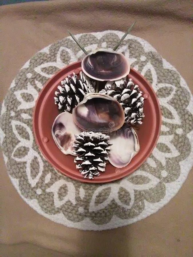 Quatro escudos dos moluscos e três cones do pinho em um plantador imagens de stock royalty free