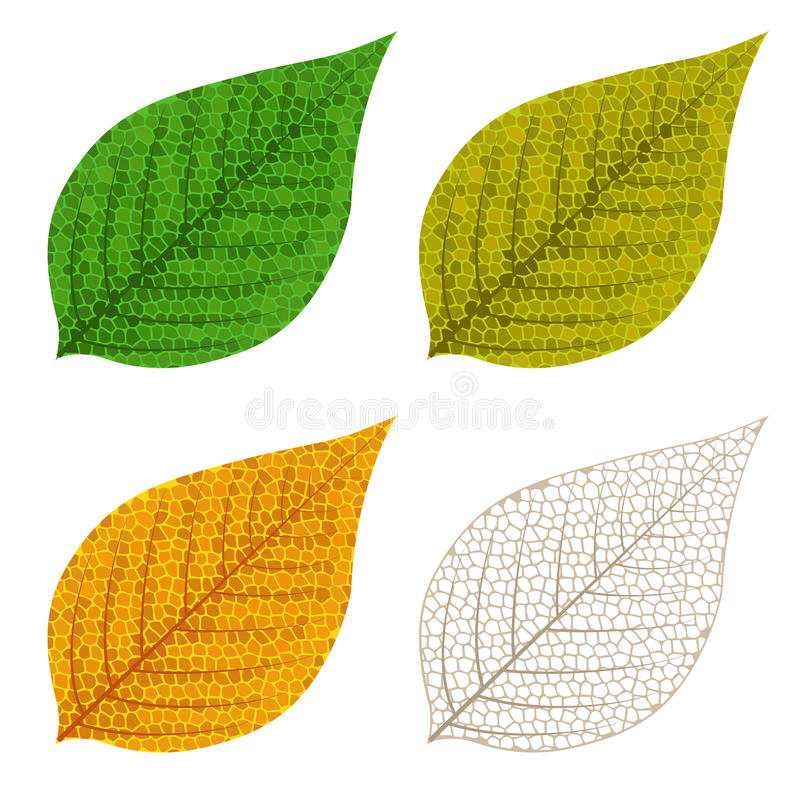 Quatro folhas do mosaico do outono ilustração royalty free