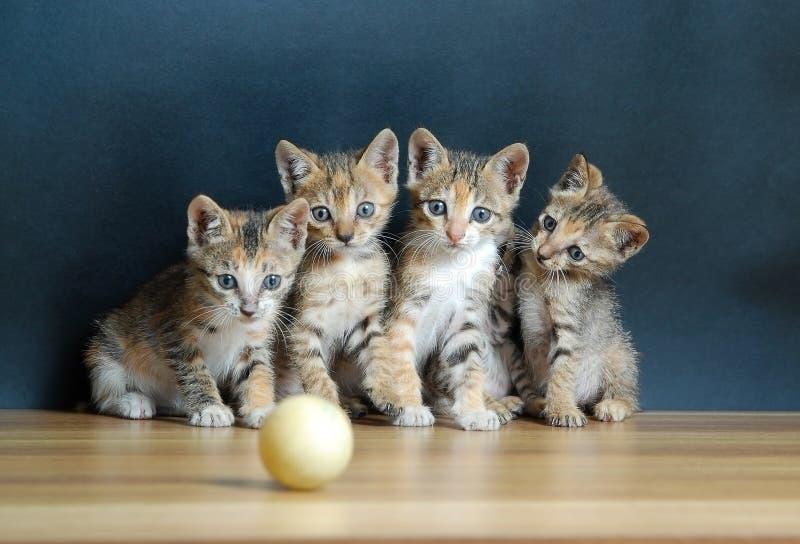 Quatro gatos bonitos fotografia de stock royalty free