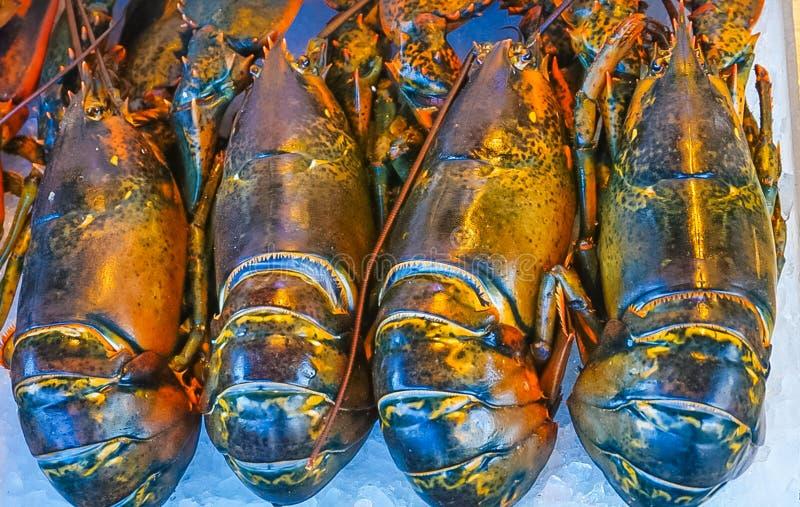Quatro lagostas frescas fotografia de stock