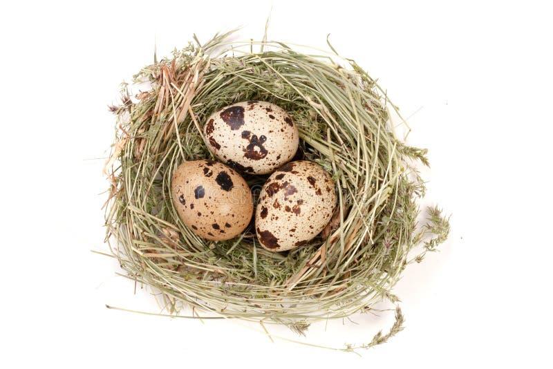 Quatro ovos de codorniz em um ninho isolado no fundo branco Vista superior fotografia de stock royalty free