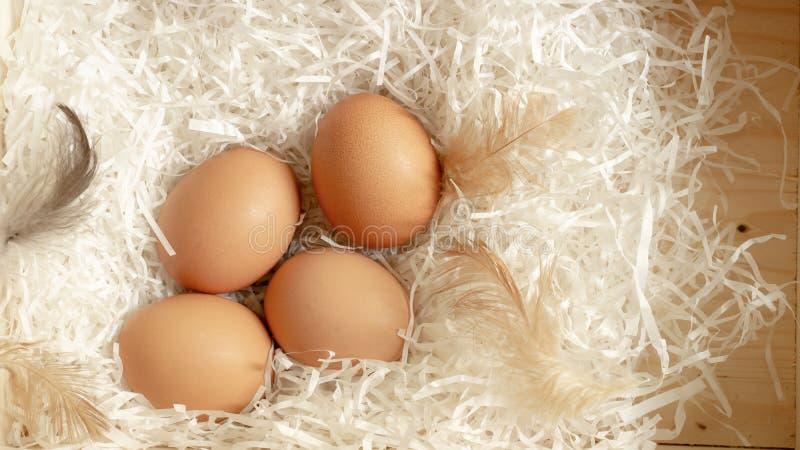 Quatro ovos de galinha e penas marrons da galinha no Livro Branco na cesta de madeira, foto da vista superior fotografia de stock royalty free