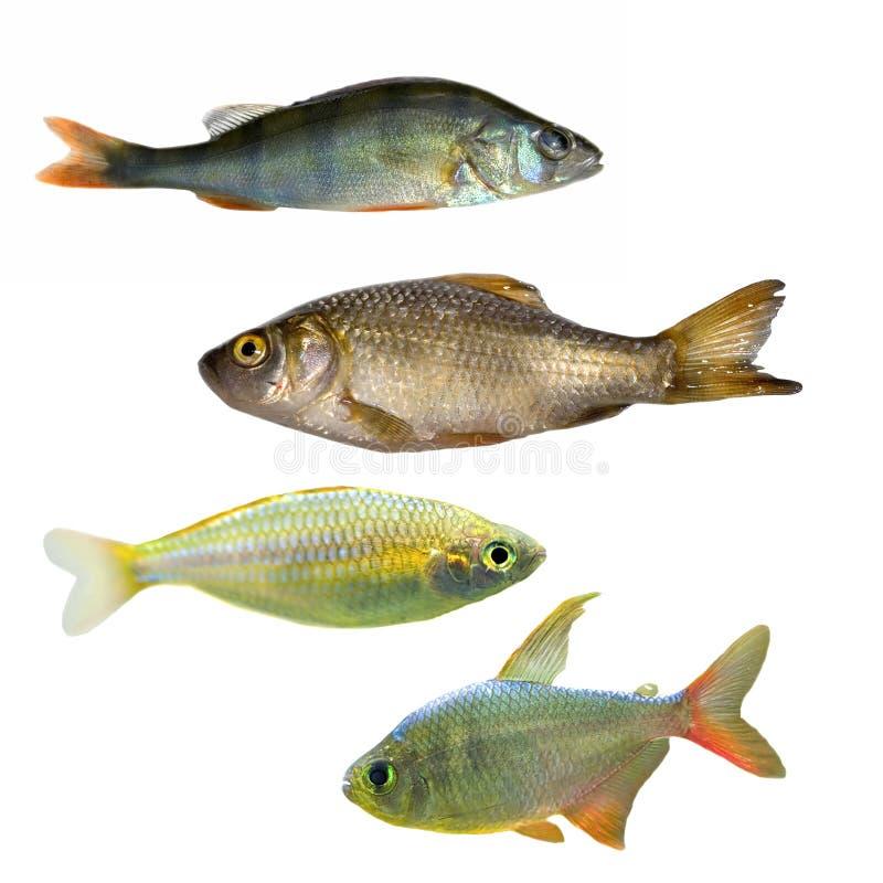 Quatro peixes diferentes imagem de stock