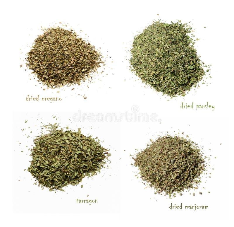 Quatro tipos de especiarias secadas Oréganos, salsa, manjerona, estragão Fundo isolado branco Vista superior imagens de stock royalty free