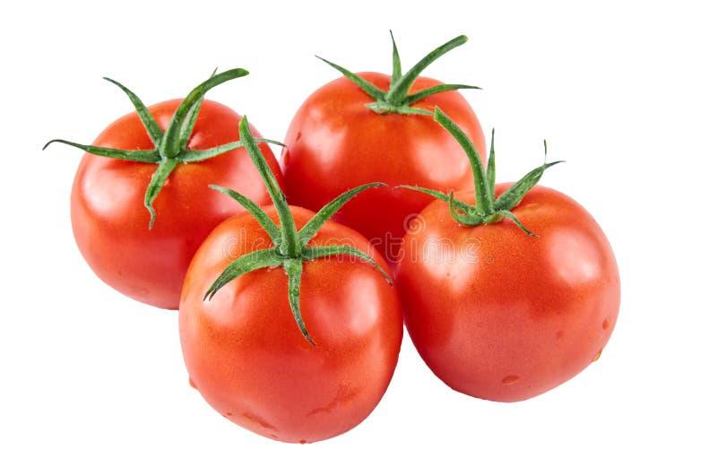 Quatro tomates frescos isolados no fundo branco Fundo do alimento biológico fotografia de stock