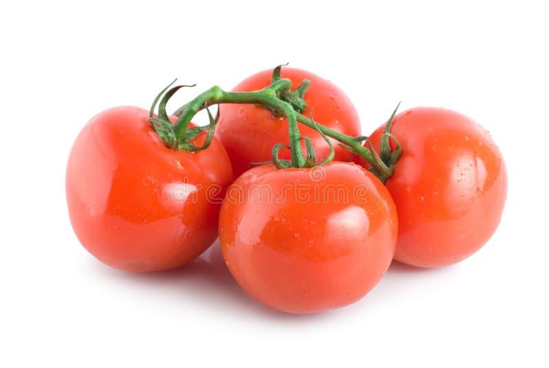 Quatro tomates maduros fotos de stock