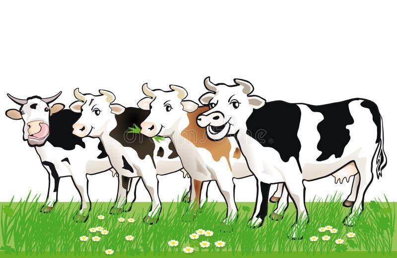 Quatro vacas manchadas felizes na grama ilustração royalty free