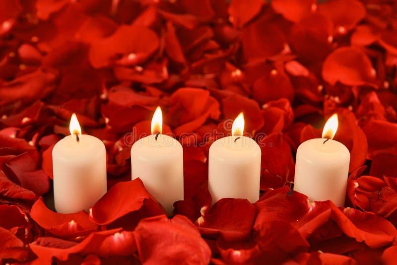 quatro velas ardentes estão nas pétalas cor-de-rosa vermelhas fotos de stock royalty free