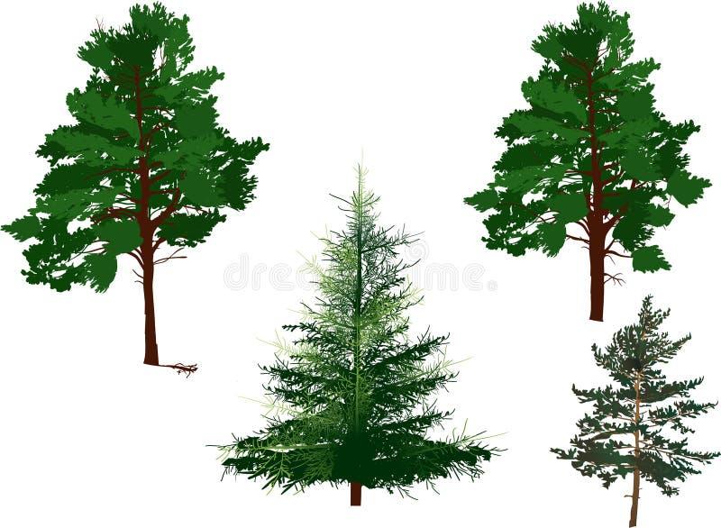 Quattro alberi sempreverdi isolati su bianco illustrazione for Gli alberi sempreverdi