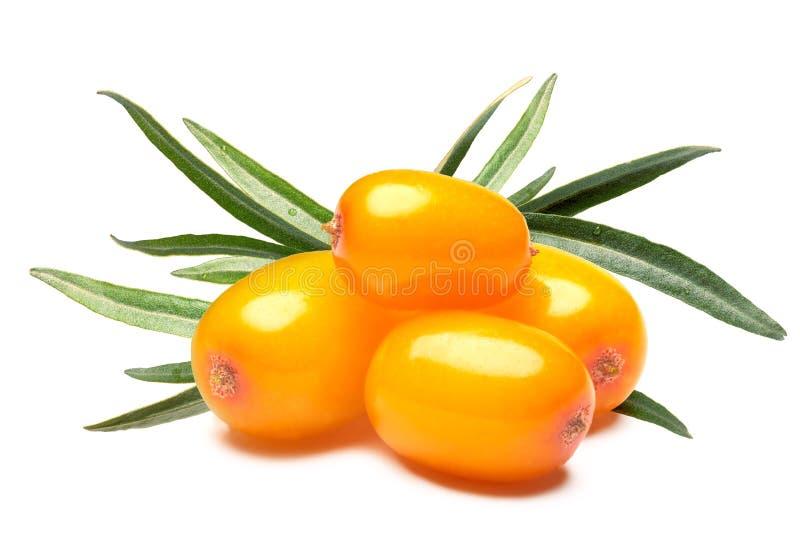 Quattro bacche dell'olivello spinoso, percorsi di ritaglio immagini stock libere da diritti