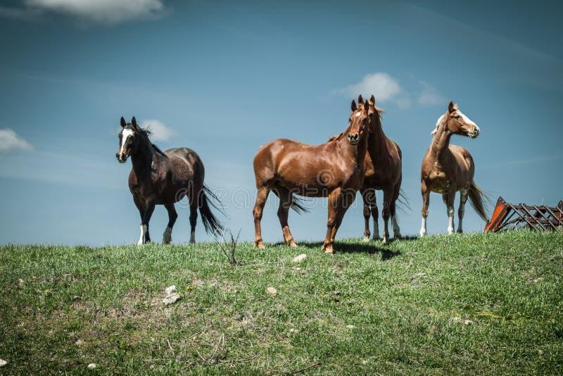 Quattro cavalli che stanno contro un cielo blu fotografie stock libere da diritti