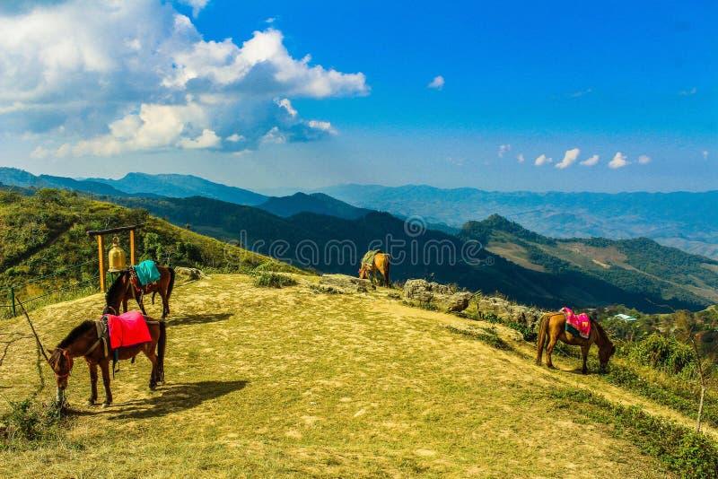 Quattro cavalli marroni in montagna sotto i cieli blu immagine stock