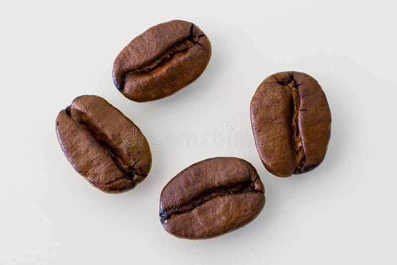Quattro chicchi di caffè su un fondo bianco fotografia stock