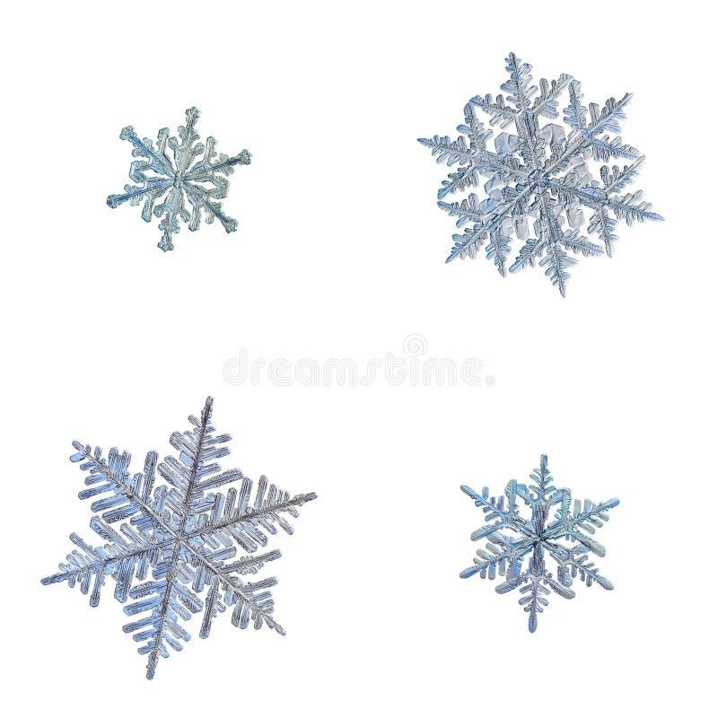 Quattro fiocchi di neve isolati su fondo bianco illustrazione vettoriale