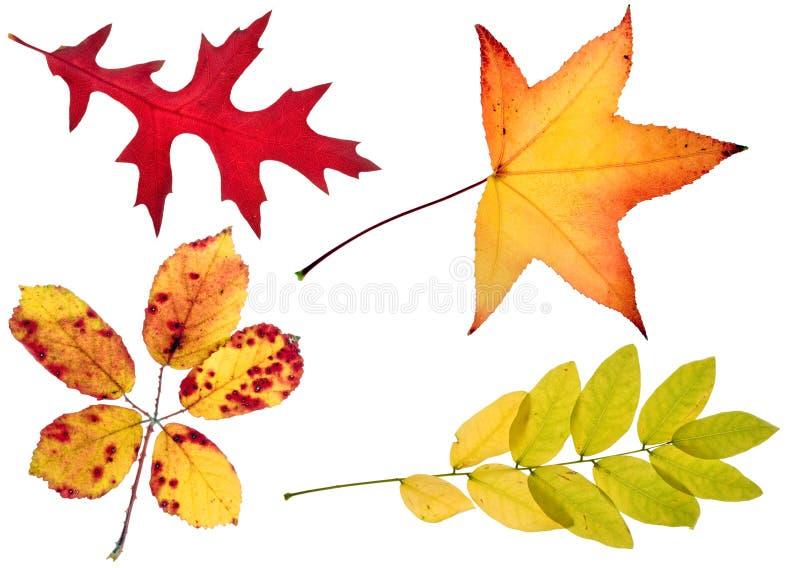 Quattro fogli di autunno immagine stock
