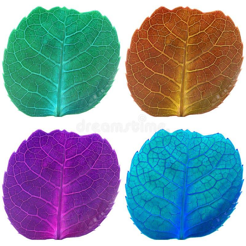 Quattro foglie con le vene nei colori fluorescenti illustrazione di stock