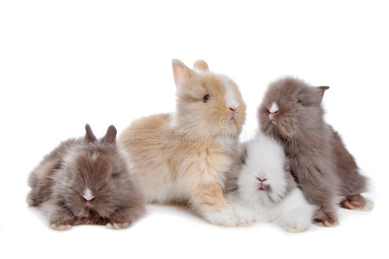 Quattro giovani conigli in una riga fotografie stock