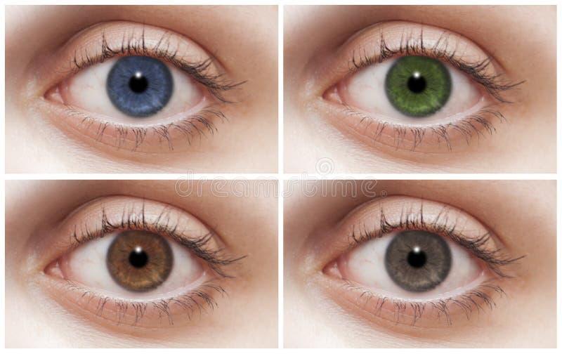 Quattro occhi fotografia stock